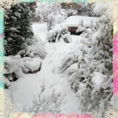 うちの庭の雪です!汗