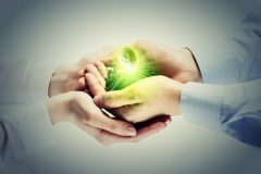 Young green sprout in human hands. Ecology concept