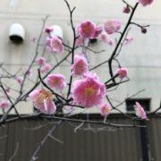 ☆福岡の結婚相談室・あなたのマリッジオフィス・ナカノ親御さんの代理お見合い会を開催。☆のタイトル画像
